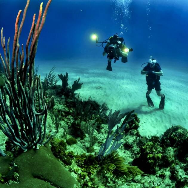 Przyrodnicze skarby Kuby: półwysep Zapata